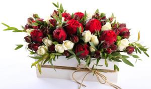 roses-tsvety-rozy-krasnye-kapli-drops